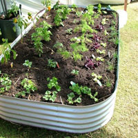 rectangle-garden-beds